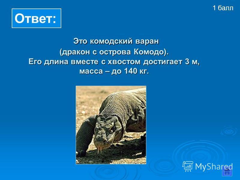 Это комодский варан (дракон с острова Комодо). Его длина вместе с хвостом достигает 3 м, масса – до 140 кг. Это комодский варан (дракон с острова Комодо). Его длина вместе с хвостом достигает 3 м, масса – до 140 кг. Ответ: 1 балл