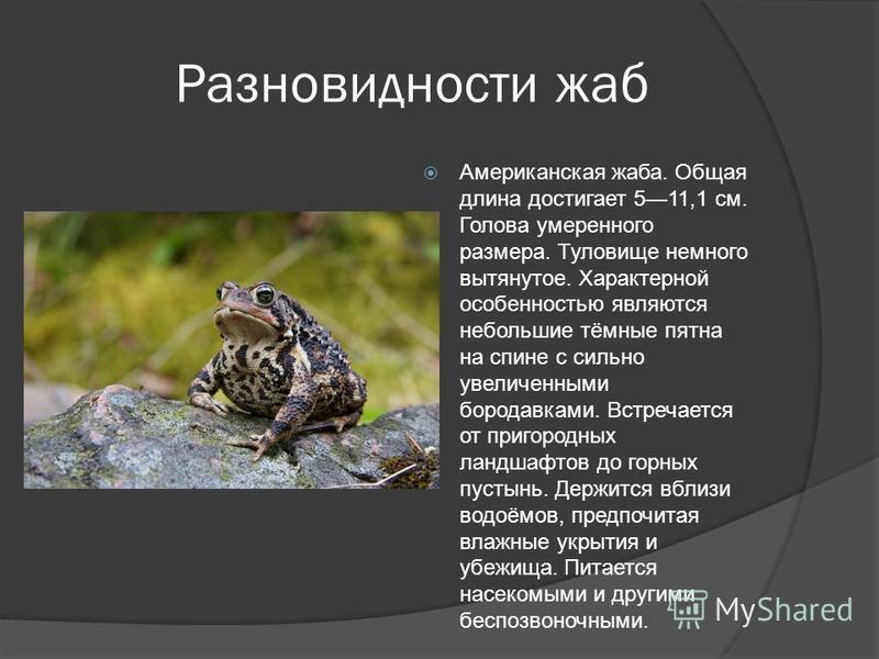 Разновидности жаб Американская жаба. Общая длина достигает 511,1 см. Голова умеренного размера. Туловище немного вытянутое. Характерной особенностью являются небольшие тёмные пятна на спине с сильно увеличенными бородавками. Встречается от пригородны