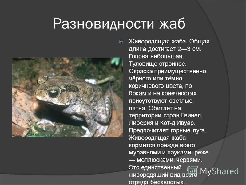 Разновидности жаб Живородящая жаба. Общая длина достигает 23 см. Голова небольшая. Туловище стройное. Окраска преимущественно чёрного или тёмно- коричневого цвета, по бокам и на конечностях присутствуют светлые пятна. Обитает на территории стран Гвин
