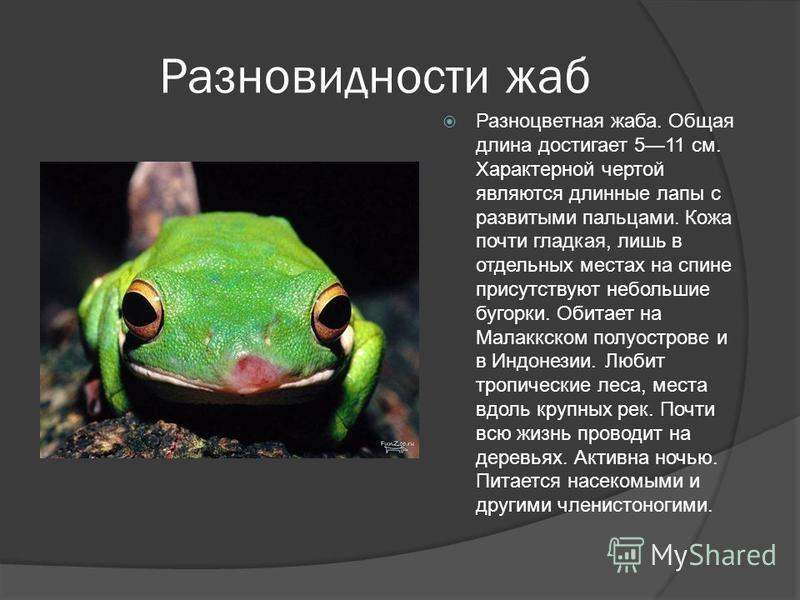 Разновидности жаб Разноцветная жаба. Общая длина достигает 511 см. Характерной чертой являются длинные лапы с развитыми пальцами. Кожа почти гладкая, лишь в отдельных местах на спине присутствуют небольшие бугорки. Обитает на Малаккском полуострове и