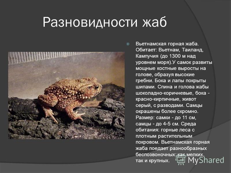 Разновидности жаб Вьетнамская горная жаба. Обитает: Вьетнам, Таиланд, Кампучия (до 1300 м над уровнем моря).У самок развиты мощные костные выросты на голове, образуя высокие гребни. Бока и лапы покрыты шипами. Спина и голова жабы шоколадно-коричневые