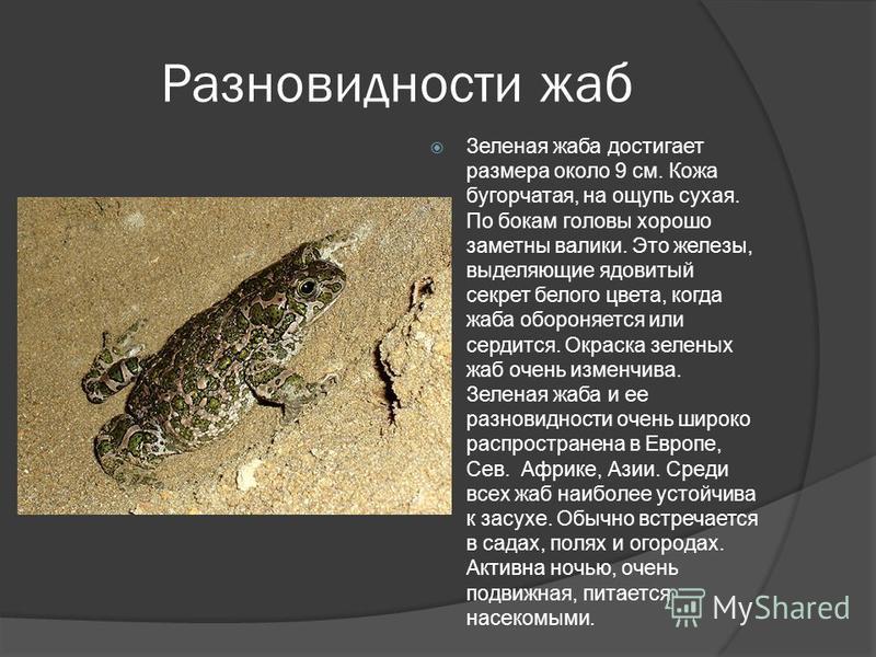 Разновидности жаб Зеленая жаба достигает размера около 9 см. Кожа бугорчатая, на ощупь сухая. По бокам головы хорошо заметны валики. Это железы, выделяющие ядовитый секрет белого цвета, когда жаба обороняется или сердится. Окраска зеленых жаб очень и