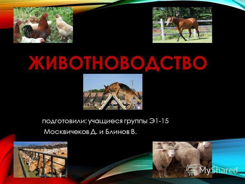 ЖИВОТНОВОДСТВО подготовили: учащиеся группы Э1-15 Москвичеков Д. и Блинов В.