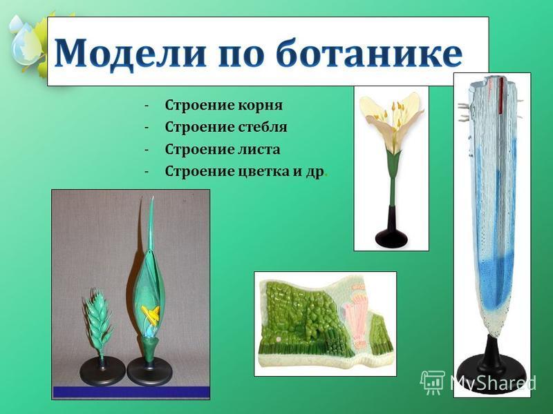 -Строение корня -Строение стебля -Строение листа -Строение цветка и др.