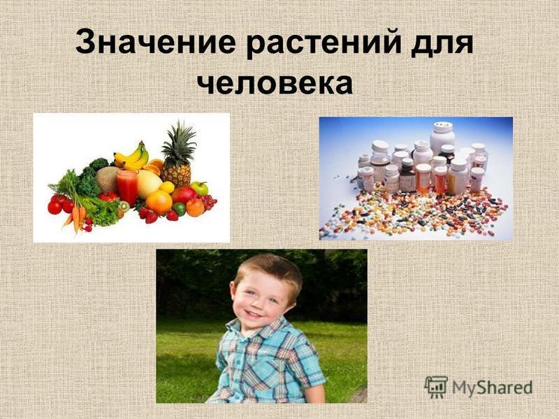 Значение растений для человека