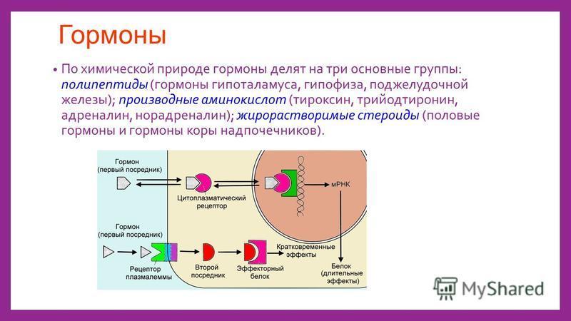 Гормоны По химической природе гормоны делят на три основные группы: полипептиды (гормоны гипоталамуса, гипофиза, поджелудочной железы); производные аминокислот (тироксин, трийодтиронин, адреналин, норадреналин); жирорастворимые стероиды (половые горм