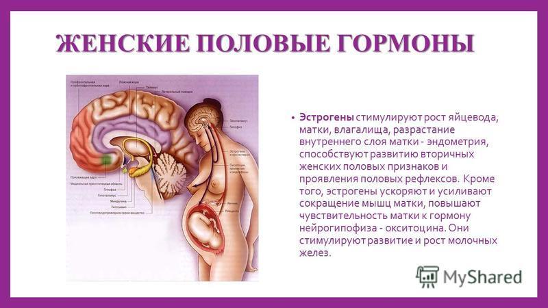 ЖЕНСКИЕ ПОЛОВЫЕ ГОРМОНЫ Эстрогены стимулируют рост яйцевода, матки, влагалища, разрастание внутреннего слоя матки - эндометрия, способствуют развитию вторичных женских половых признаков и проявления половых рефлексов. Кроме того, эстрогены ускоряют и