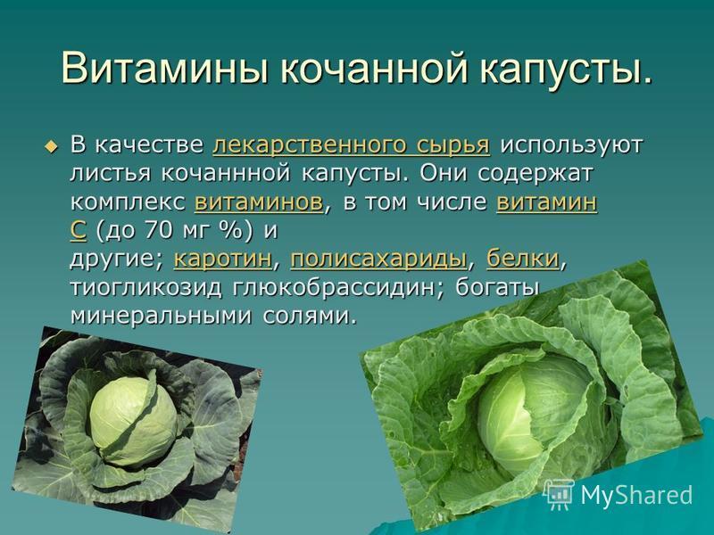 Витамины кочанной капусты. В качестве лллл ееее кккк аааа рррр сссс тттт вввв ееее нннн нннн оооо гггг оооо с с с с ыыыы рррр ьььь яяяя используют листья кочаннной капусты. Они содержат комплекс вввв ииии тттт аааа мммм ииии нннн оооо вввв, в том чис