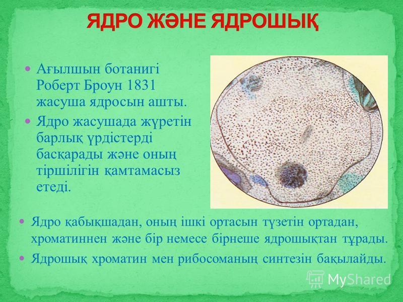 Ядро қабықшадан, оның ішкі ортасын түзетін ортадан, хроматиннен және бір немесе бірнеше ядрошықтан тұрады. Ядрошық хроматин мен рибосоманың синтезін бақылайды. Ағылшын ботанигі Роберт Броун 1831 жасуша ядросын ашты. Ядро жасушада жүретін барлық үрдіс