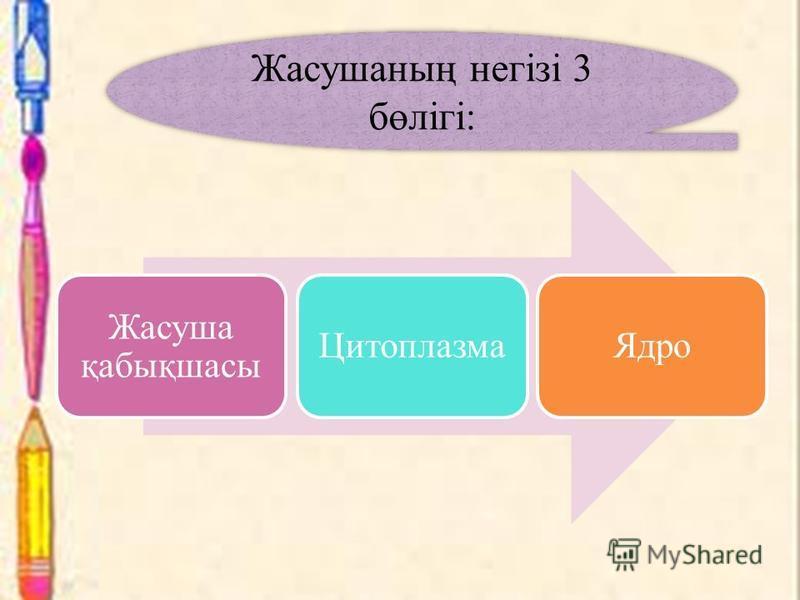 Жасуша қабықшасы ЦитоплазмаЯдро Жасушаның негізі 3 бөлігі: