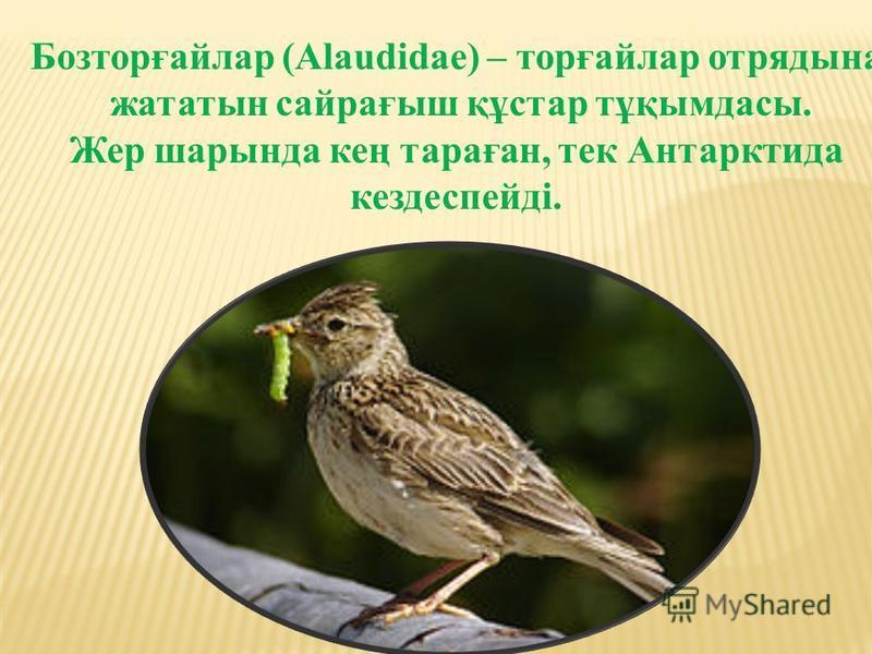 Бозторғайлар (Alaudіdae) – торғайлар отрядына жататын сайрағыш құстар тұқымдасы. Жер шарында кең тараған, тек Антарктида кездеспейді.