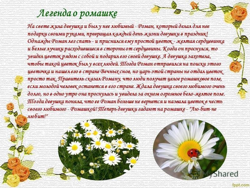 Легенда о ромашке На свете жила девушка и был у нее любимый - Роман, который делал для нее подарки своими руками, превращал каждый день жизни девушки в праздник! Однажды Роман лег спать - и приснился ему простой цветок - желтая сердцевинка и белые лу