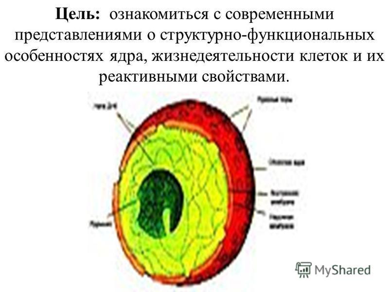 Цель: ознакомиться с современными представлениями о структурно-функциональных особенностях ядра, жизнедеятельности клеток и их реактивными свойствами.