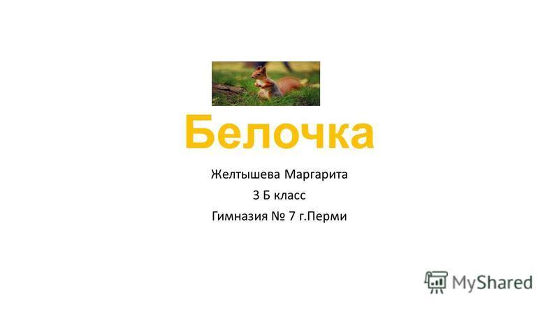 Белочка Желтышева Маргарита 3 Б класс Гимназия 7 г.Перми