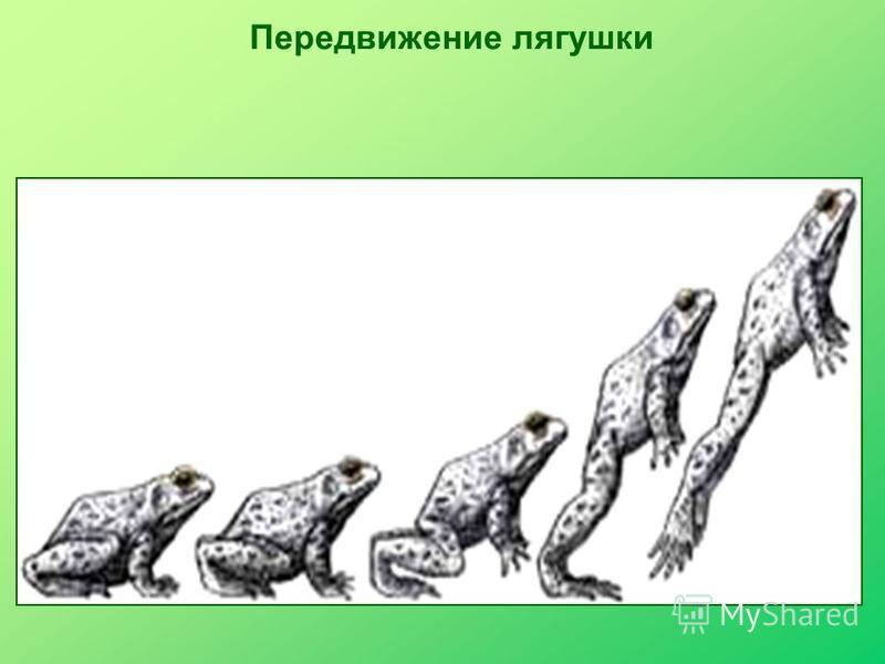 Передвижение лягушки