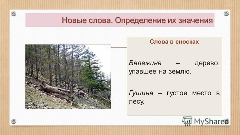 Новые слова. Определение их значения Слова в сносках Валежина – дерево, упавшее на землю. Гущина – густое место в лесу.