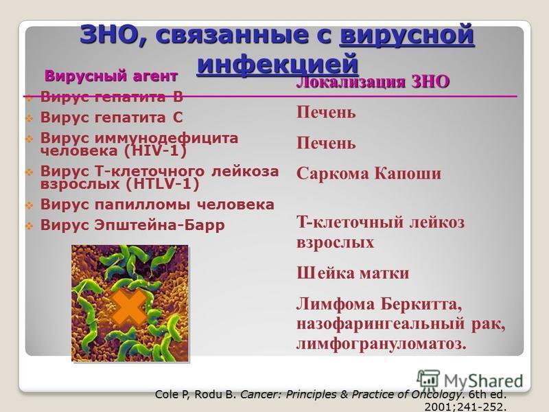 Локализация ЗНО Печень Саркома Капоши T-клеточный лейкоз взрослых Шейка матки Лимфома Беркитта, назофарингеальный рак, лимфогранулематоз. Вирусный агент Вирусный агент Вирус гепатита B Вирус гепатита C Вирус иммунодефицита человека (HIV-1) Вирус Т-кл