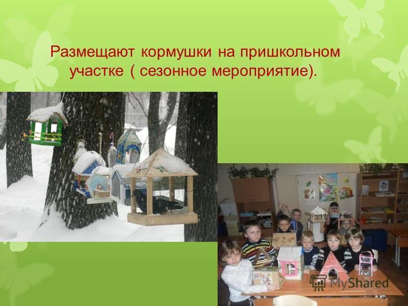 Размещают кормушки на пришкольном участке ( сезонное мероприятие).