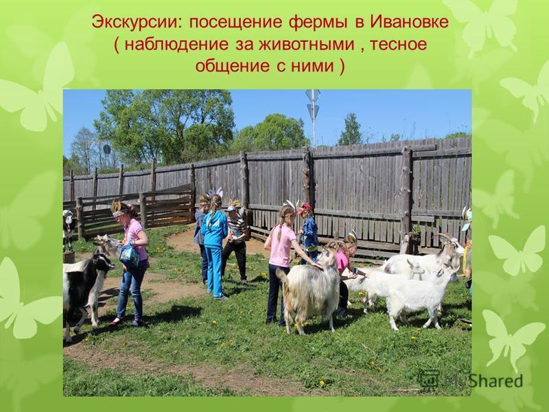 Экскурсии: посещение фермы в Ивановке ( наблюдение за животными, тесное общение с ними )