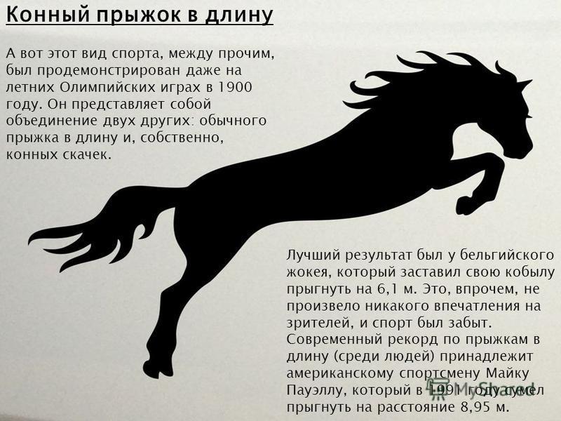 Конный прыжок в длину А вот этот вид спорта, между прочим, был продемонстрирован даже на летних Олимпийских играх в 1900 году. Он представляет собой объединение двух других: обычного прыжка в длину и, собственно, конных скачек. Лучший результат был у