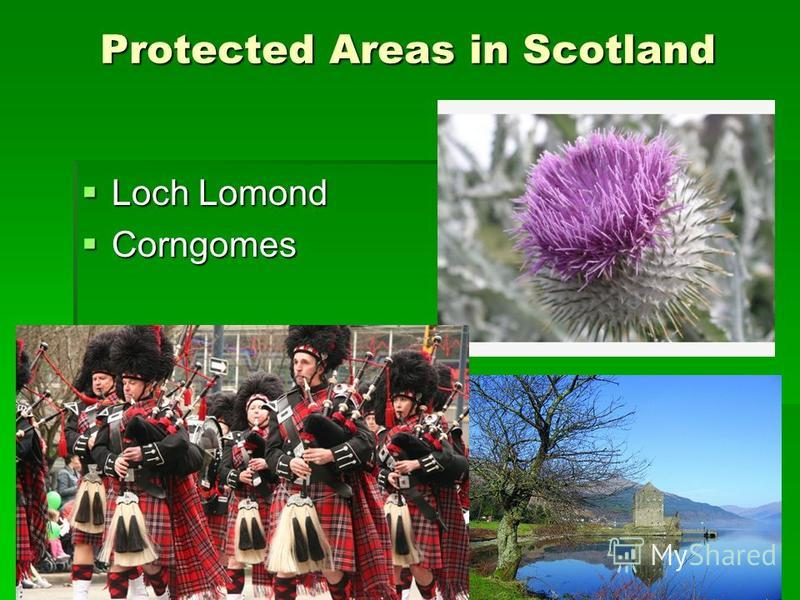Protected Areas in Scotland Loch Lomond Loch Lomond Corngomes Corngomes