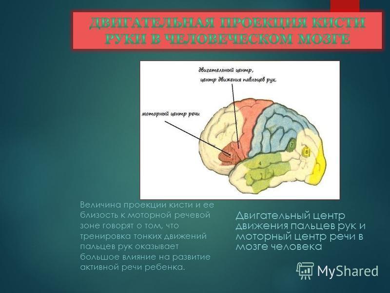 Мнения ученых Невропатолог и психиатр В. М. Бехтерев писал, что движения руки всегда были тесно связаны с речью и способствовали ее развитию. Английский психолог Д. Селли также придавал очень большое значение