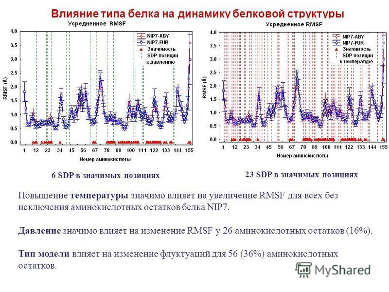 23 SDP в значимых позициях 6 SDP в значимых позициях Влияние типа белка на динамику белковой структуры Повышение температуры значимо влияет на увеличение RMSF для всех без исключения аминокислотных остатков белка NIP7. Давление значимо влияет на изме