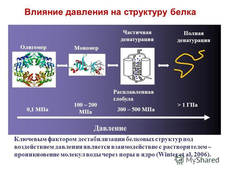 Влияние давления на структуру белка Олигомер Мономер Частичная денатурация Полная денатурация Расплавленная глобула Давление 0,1 МПа 100 – 200 МПа > 1 ГПа 300 – 500 МПа Ключевым фактором дестабилизации белковых структур под воздействием давления явля