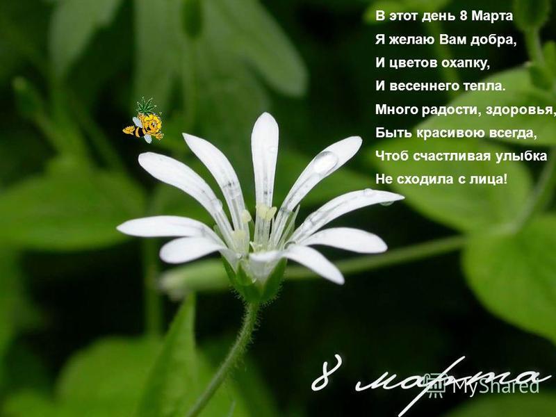 В этот день 8 Марта Я желаю Вам добра, И цветов охапку, И весеннего тепла. Много радости, здоровья, Быть красивою всегда, Чтоб счастливая улыбка Не сходила с лица!