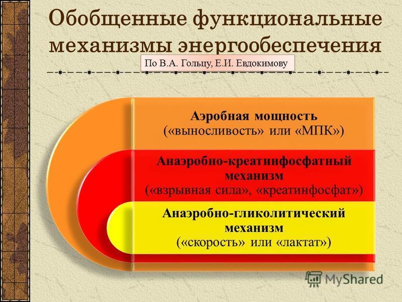 Обобщенные функциональные механизмы энергообеспечения Аэробная мощность («выносливость» или «МПК») Анаэробно-креатинфосфатный механизм («взрывная сила», «креатинфосфат») Анаэробно-гликолитический механизм («скорость» или «лактат») По В.А. Гольцу, Е.И