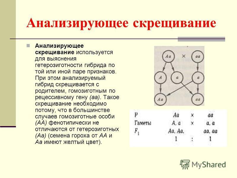 Анализирующее скрещивание Анализирующее скрещивание используется для выяснения гетерозиготности гибрида по той или иной паре признаков. При этом анализируемый гибрид скрещивается с родителем, гомозиготным по рецессивному гену (а). Такое скрещивание н