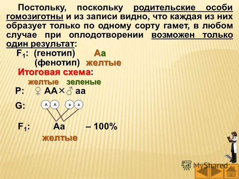 Постольку, поскольку родительские особи гомозиготны и из записи видно, что каждая из них образует только по одному сорту гамет, в любом случае при оплодотворении возможен только один результат: Аа F 1 : (генотип) Аа желтые (фенотип) желтые Итоговая с