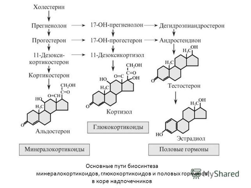 Основные пути биосинтеза минералокортикоидов, глюкокортикоидов и половых гормонов в коре надпочечников