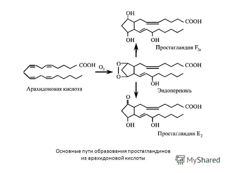 Основные пути образования простагландинов из арахидоновой кислоты