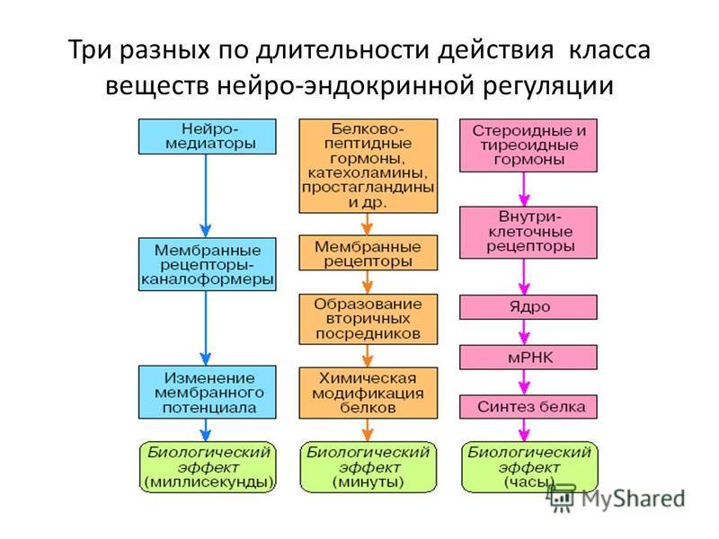 Три разных по длительности действия класса веществ нейро-эндокринной регуляции
