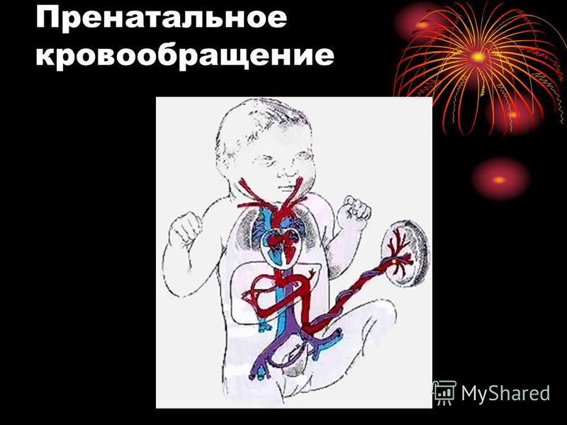 Пренатальное кровообращение
