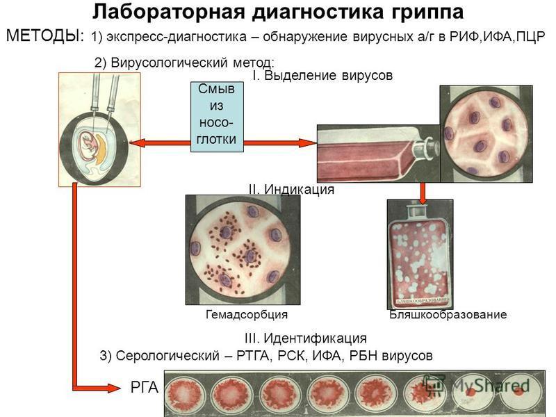 Лабораторная диагностика гриппа МЕТОДЫ: 1) экспресс-диагностика – обнаружение вирусных а/г в РИФ,ИФА,ПЦР 2) Вирусологический метод: 3) Серологический – РТГА, РСК, ИФА, РБН вирусов Смыв из носоглотки I. Выделение вирусов II. Индикация Гемадсорбция Бля