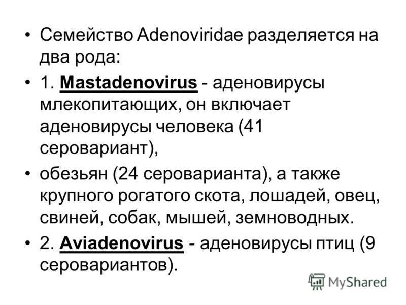 Семейство Adenoviridae разделяется на два рода: 1. Mastadenovirus - аденовирусы млекопитающих, он включает аденовирусы человека (41 серовариант), обезьян (24 сероварианта), а также крупного рогатого скота, лошадей, овец, свиней, собак, мышей, земново