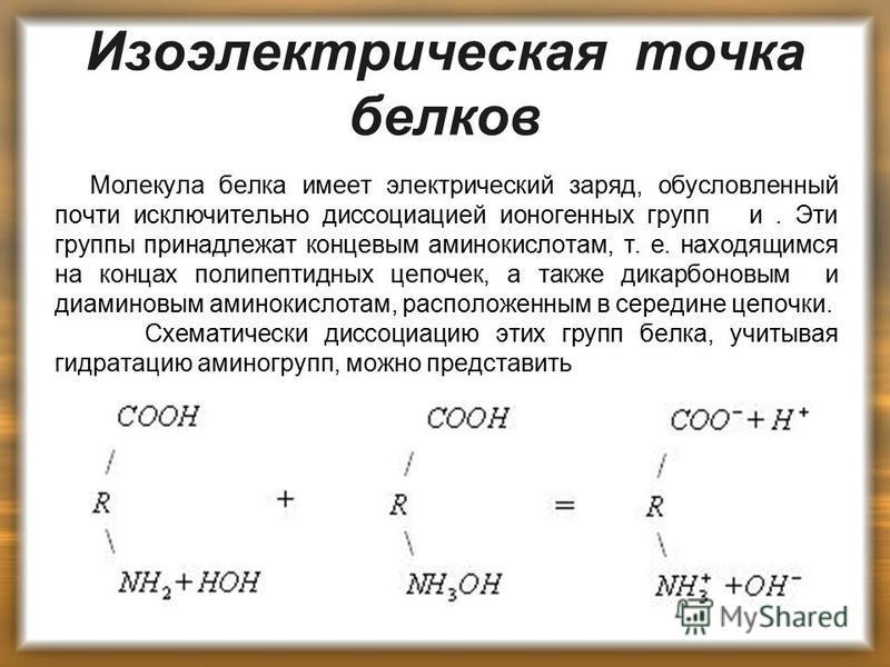 Изоэлектрическая точка белков Молекула белка имеет электрический заряд, обусловленный почти исключительно диссоциацией ионогенных групп и. Эти группы принадлежат концевым аминокислотам, т. е. находящимся на концах полипептидных цепочек, а также дикар