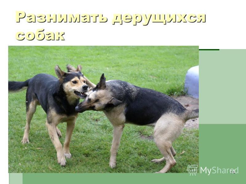 14 Разнимать дерущихся собак