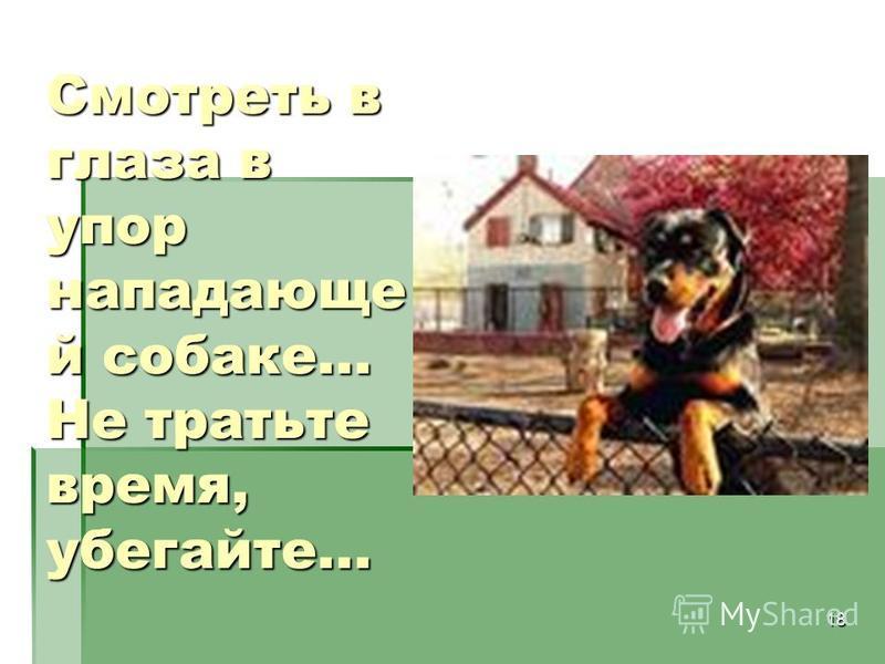 18 Смотреть в глаза в упор на падающей собаке... Не тратьте время, убегайте...