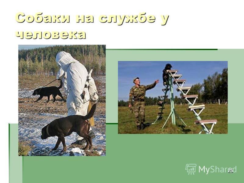 25 Собаки на службе у человека