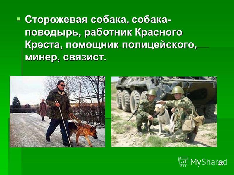 26 Сторожевая собака, собака- поводырь, работник Красного Креста, помощник полицейского, минер, связист. Сторожевая собака, собака- поводырь, работник Красного Креста, помощник полицейского, минер, связист.