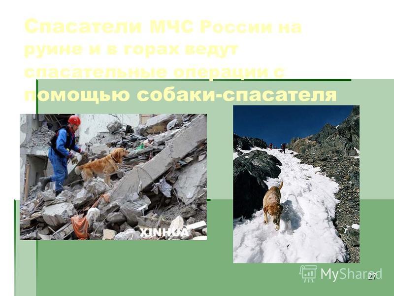 27 Спасатели МЧС России на руине и в горах ведут спасательные операции с помощью собаки-спасателя