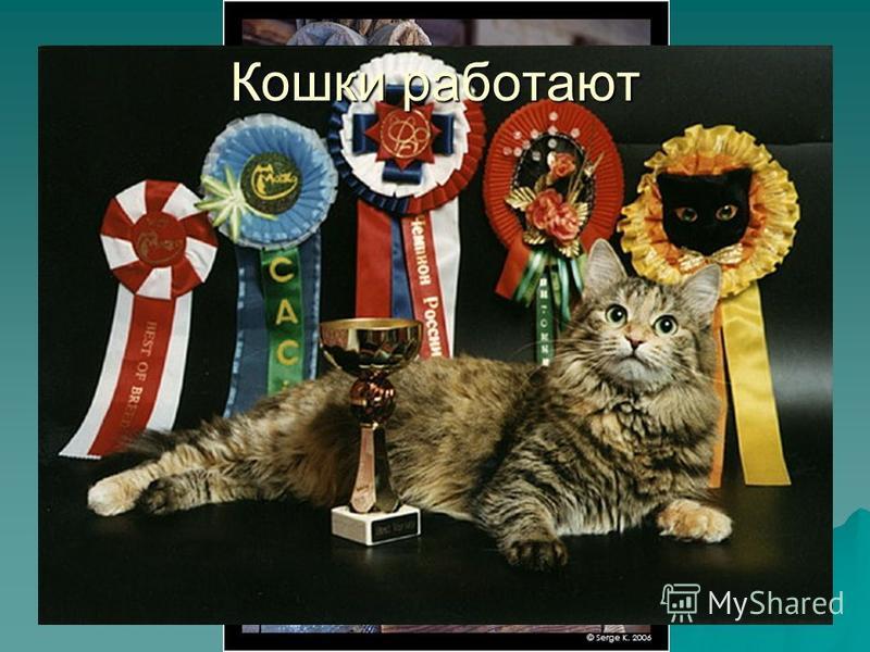 Первый в мире дрессировщик кошек – Валерий Мусин (он работал в Московском цирке с 1968 по 1990 г) Юрий Куклачев