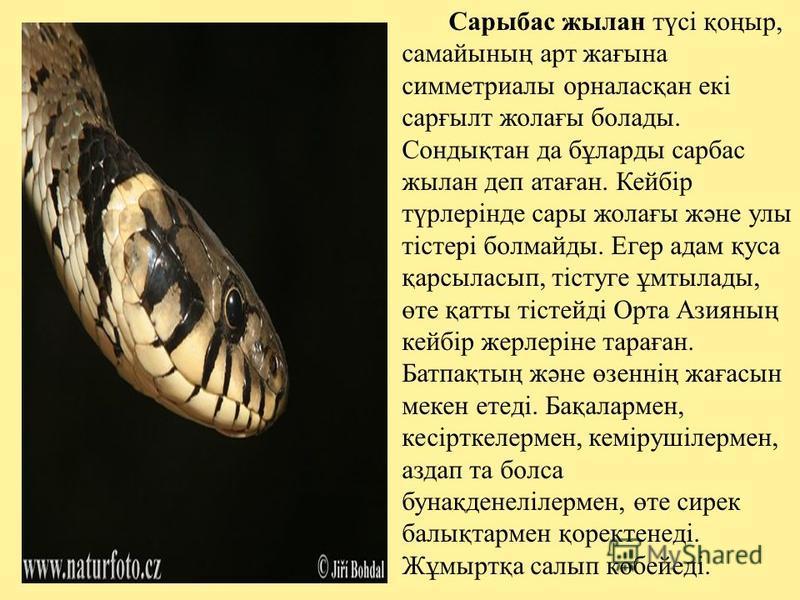 Сарыбас жылан түсі қоңыр, самайының арт жағына симметриалы орналасқан екі сарғылт жолағы болады. Сондықтан да бұларды сарбас жылан деп атаған. Кейбір түрлерінде сары жолағы және улы тістері болмайды. Егер адам қуса қарсыласып, тістуге ұмтылады, өте қ