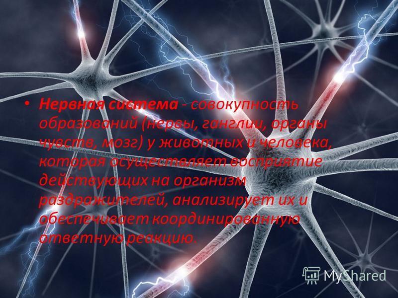 Нервная система - совокупность образований (нервы, ганглии, органы чувств, мозг) у животных и человека, которая осуществляет восприятие действующих на организм раздражителей, анализирует их и обеспечивает координированную ответную реакцию.