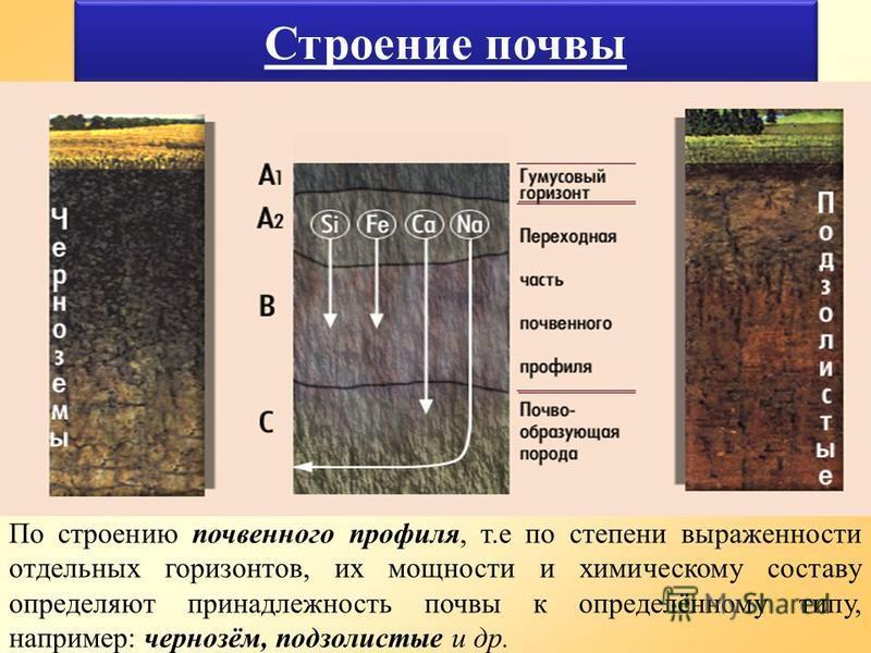 По строению почвенного профиля, т.е по степени выраженности отдельных горизонтов, их мощности и химическому составу определяют принадлежность почвы к определённому типу, например: чернозём, подзолистые и др.