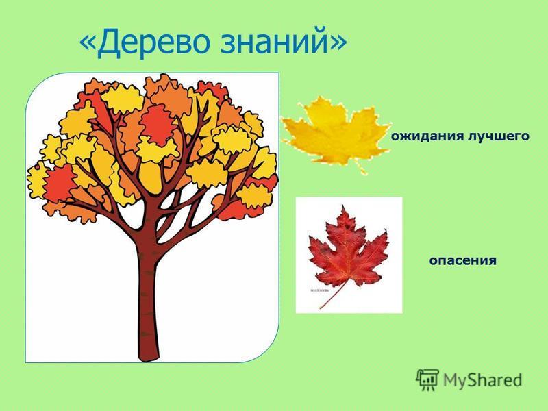 «Дерево знаний» ожидания лучшего опасения