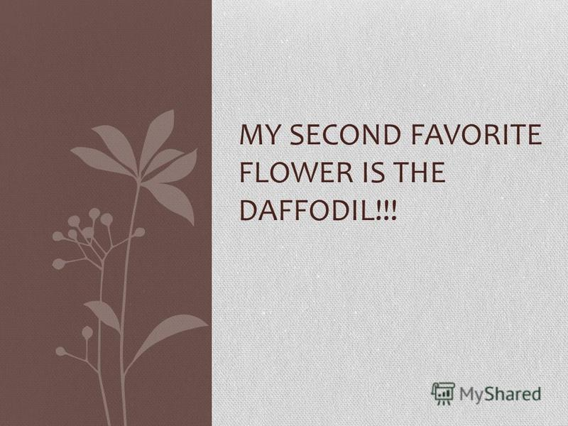 MY SECOND FAVORITE FLOWER IS THE DAFFODIL!!!